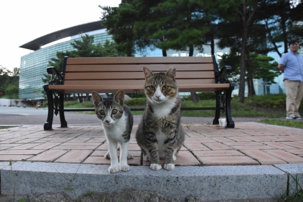 Beloved POSTECH Cats