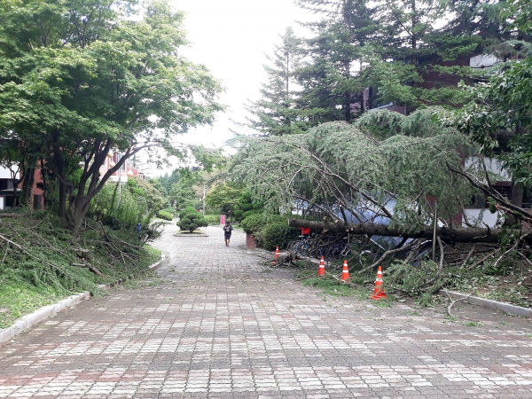 Fall Typhoons Slam South Korea